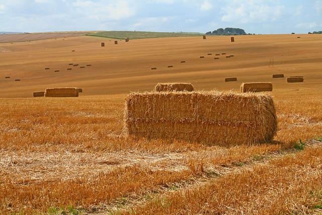 Wiltshire-Hay1