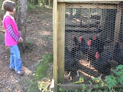 Sophie and the Chickens