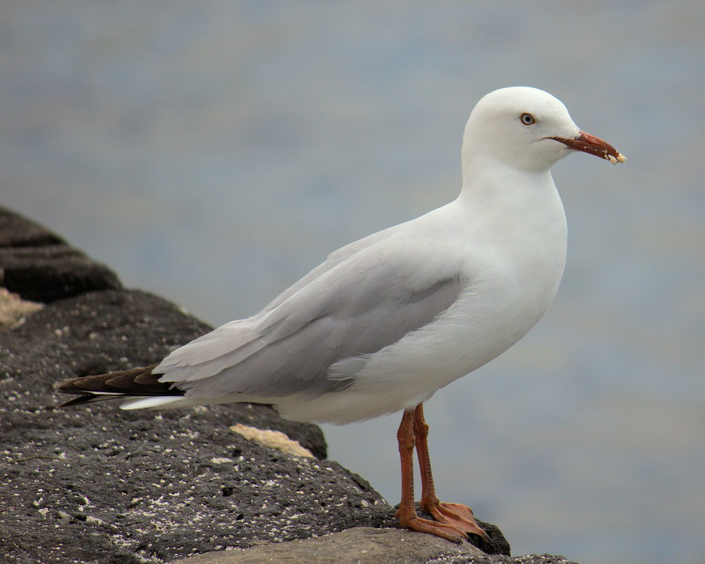 Just a seagull