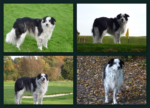 Beinn. My border collie throughout the years.