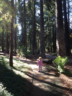 Redwood forest in Davis?