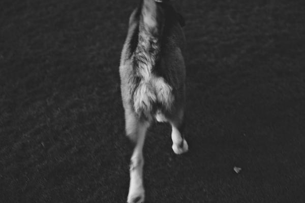 jaxharmon_dogpark_14