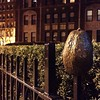#avocado #stuckonafence in#dupontneighborhood #washingtondc