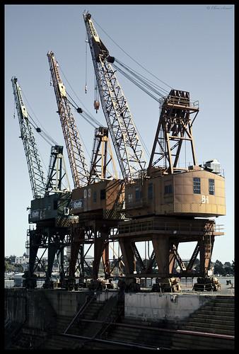 Cranes by sigma.