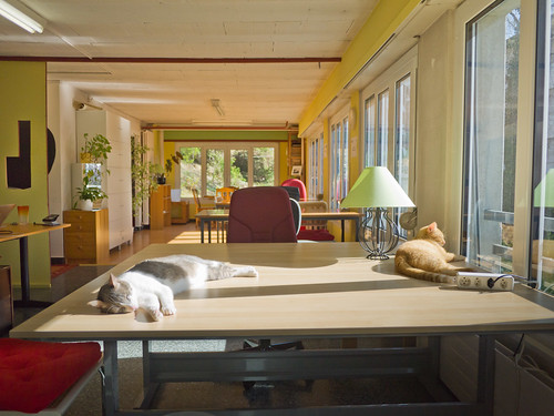 La dure vie de chat de l'eclau