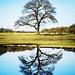 Oak tree / oak tree by m+b