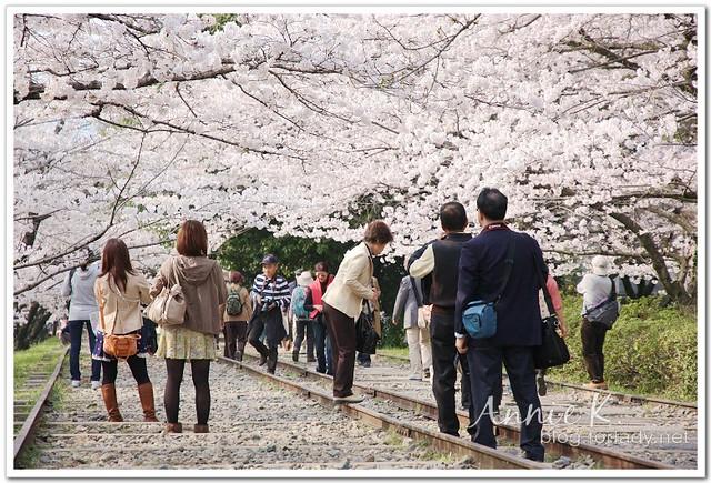 櫻_蹴上鐵道