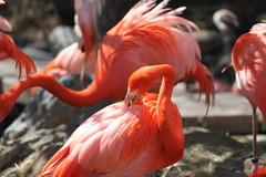 red(0.0), ibis(0.0), animal(1.0), fauna(1.0), beak(1.0), flamingo(1.0), bird(1.0),