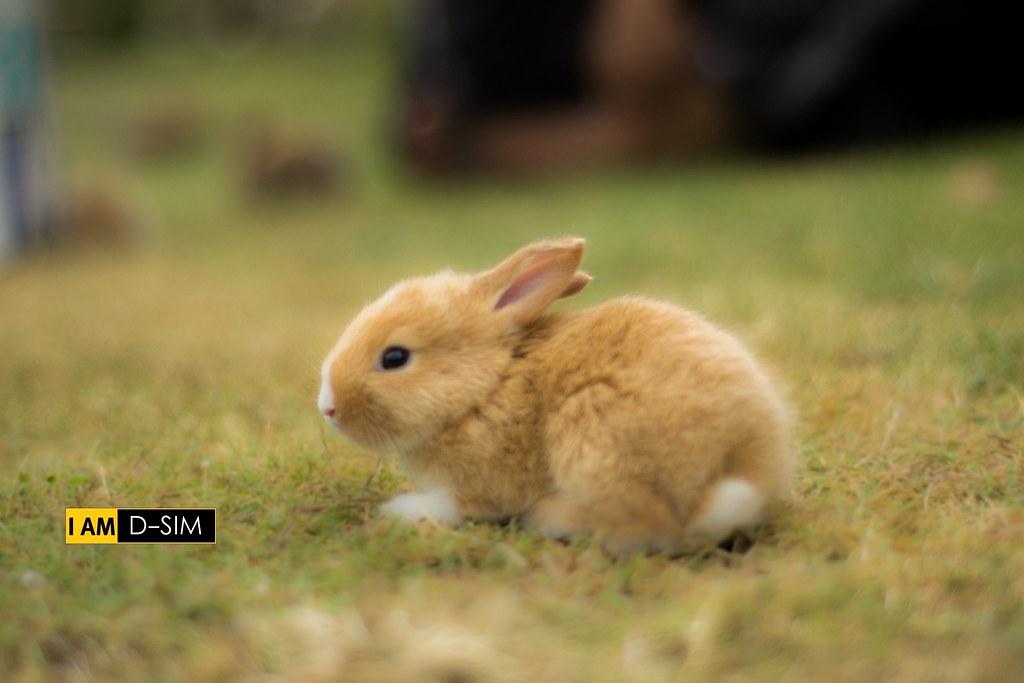Baby Rabbit (21)