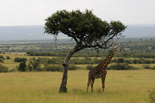 Top Places to go on an African Safari