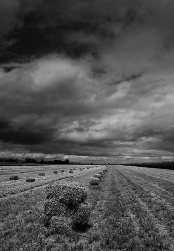 Bottes de paille sous un ciel orageux NB