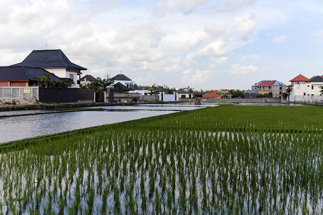 Flooded Rice Paddies