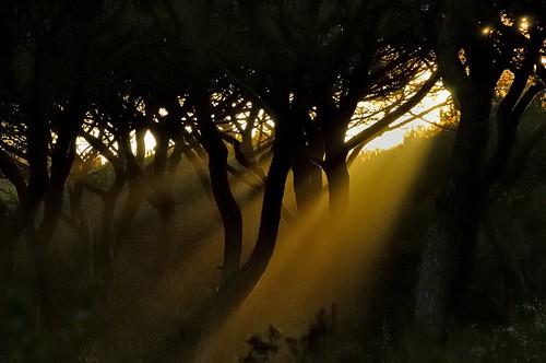 sunset tramonto peaceful sunsetwoods