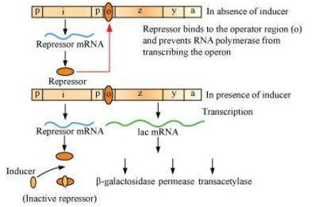 molecular biology principles of genome function pdf
