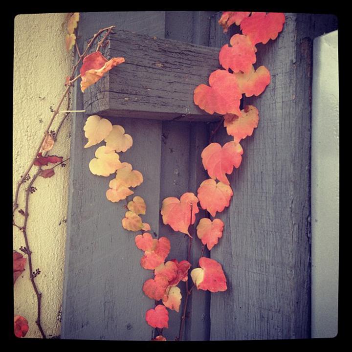 laneway_esme instagram leaves red