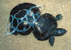 plastic_turtle