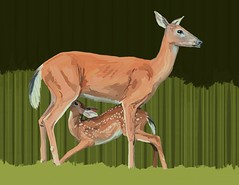 [Free Images] Graphics, Illustration, Graphics - Animals, Deers, Animals - Parent and Child ID:201208041600