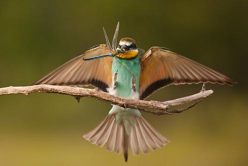 pajaro insecto