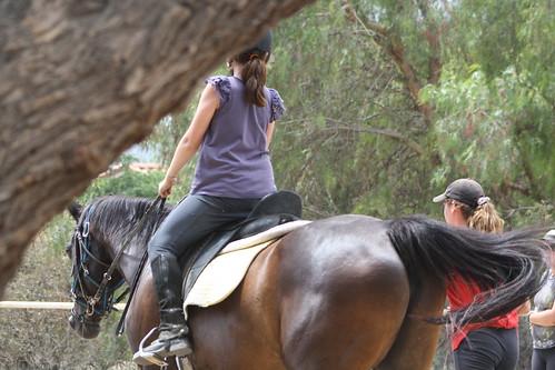 horse camp