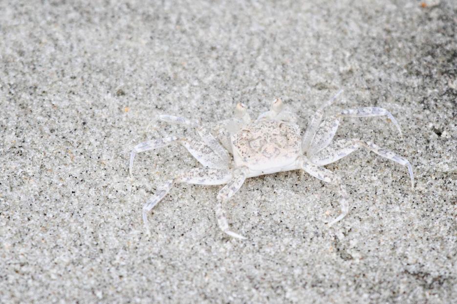 072212_03_beach_Crab