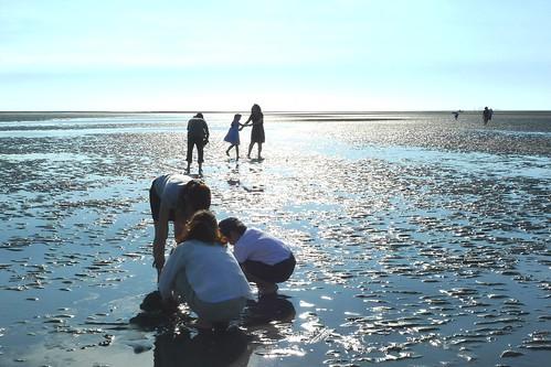 彰化海岸濕地是全台最大的潮間帶泥灘地,孕育出富饒的榖倉和魚米之鄉。攝影:詹嘉紋