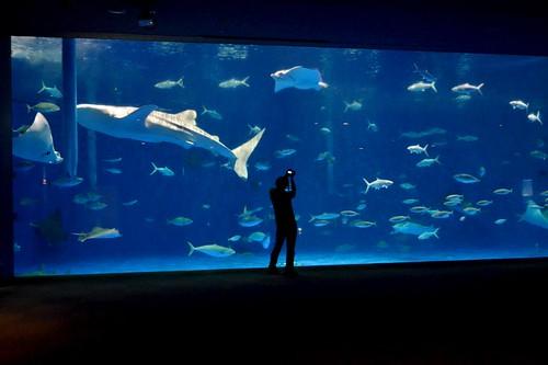 2012夏日大作戰 - 鹿児島 - かごしま水族館 (4)