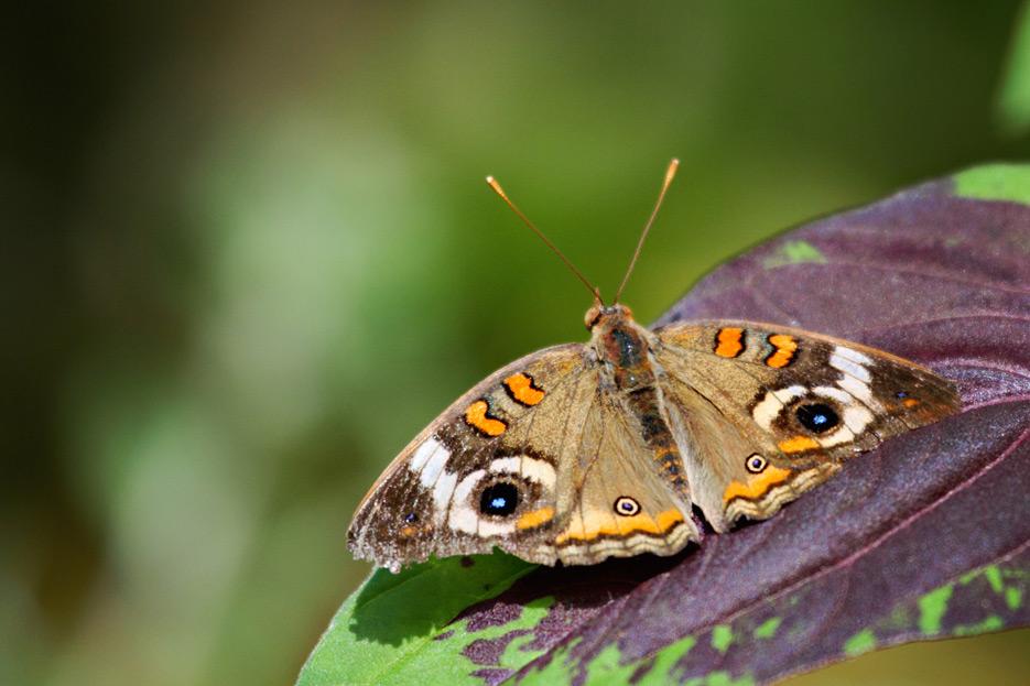 072612_08_butterfly04