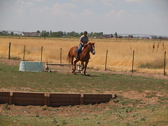 K and Calliope, jumping a small vertical