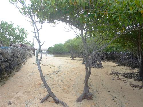 Bali-Lembongan-Mangrove (5)