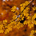 Autumn colours in the city. by George Ino