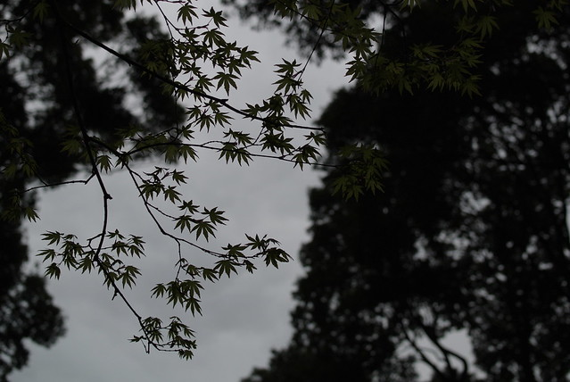 Nikon1 V1 明治神宮 2014年3月27日