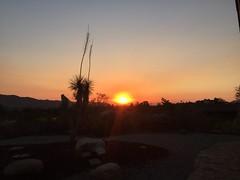 Desert sunrise...