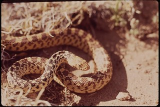 coiled snake in a desert setting