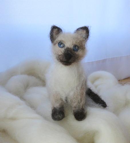 Siames kitten