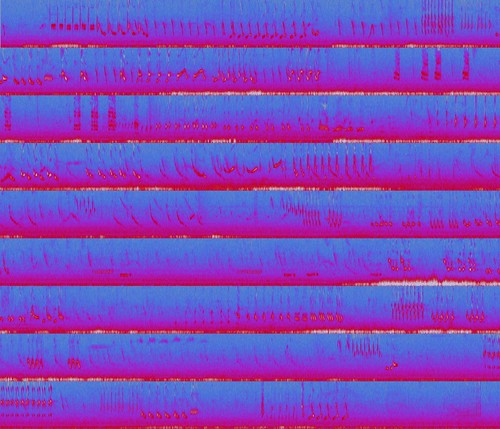 Listen along to the recording! This is the spectrogram of a three-minute recording of a northern mockingbird (Mimus polyglottos) singing at the Brooklyn Botanic Garden.  I made this using the spectrogram view in Audacity. There's no way to export it directly, so I took 36 screenshots scrolling through it and hit it up with ImageMagick.  for file in {00..36}; do convert m$file.png -crop 1469x560+143+137 d$file.png; done; convert d{00..03}.png +append D0.png; convert d{04..07}.png +append D1.png; convert d{08..11}.png +append D2.png; convert d{12..15}.png +append D3.png; convert d{16..19}.png +append D4.png; convert d{20..23}.png +append D5.png; convert d{24..27}.png +append D6.png; convert d{28..31}.png +append D7.png; convert d{32..35}.png +append D8.png; convert D*.png -append spectrogram_stacked.png