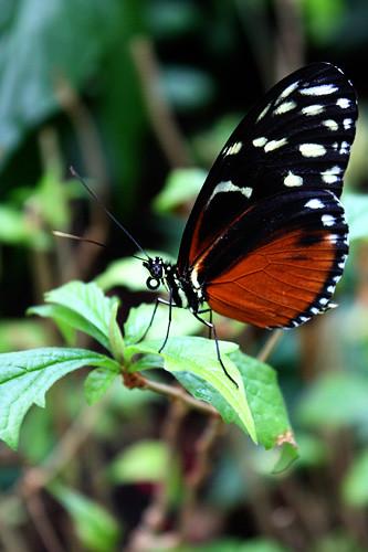 Closeup-butterfly