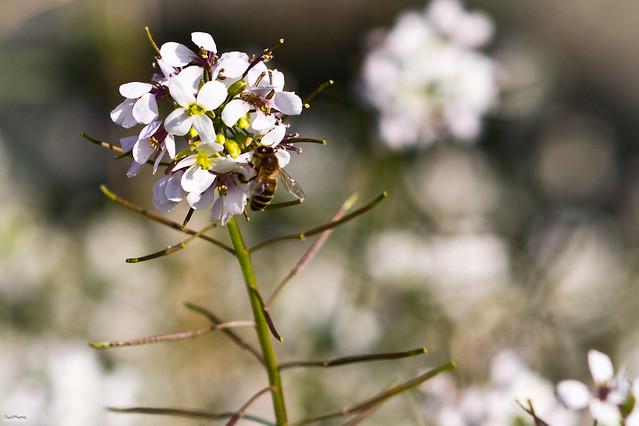 Reto primavera - La descartada