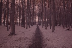 Experimenting with Infrared photography