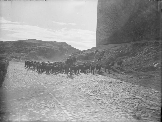 Rebaño desciende por el camino junto al Castillo de San Servando en los años 20. Detalle de una Fotografía de Otto Wünderlich. © Fototeca del Patrimonio Histórico