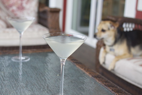 Trudy roo guards the martinis