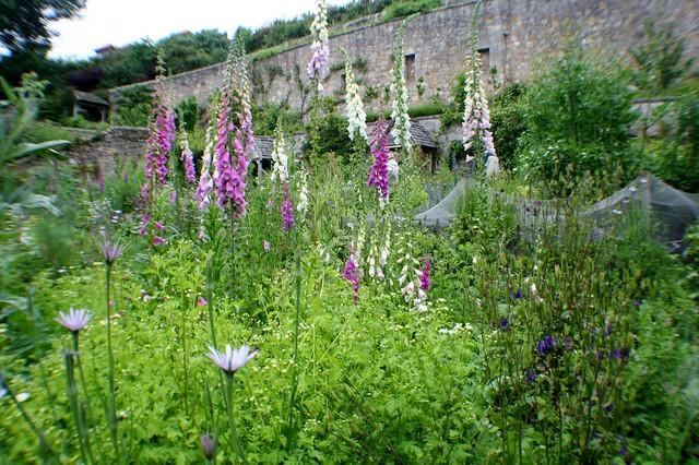 Culross Palace Garden, Fife Coast