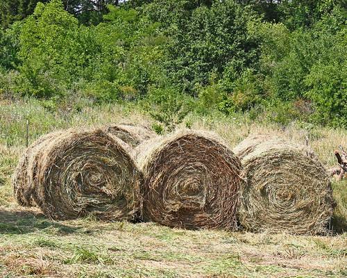 Winter's hay