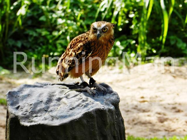 Jurong Bird Park 10