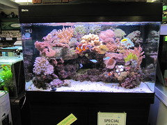 Display Marine Tank
