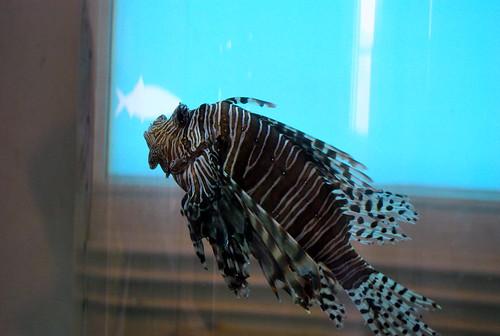 WPIR - fish