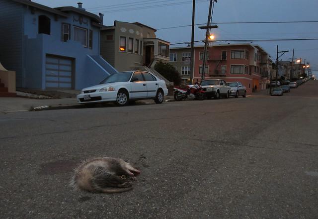 RIP Opossum.  (San Francisco, 2012)