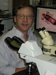 Entomologist Richard Pollack