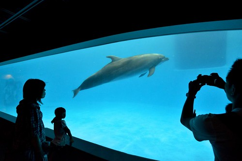 2012夏日大作戰 - 鹿児島 - かごしま水族館 (17)