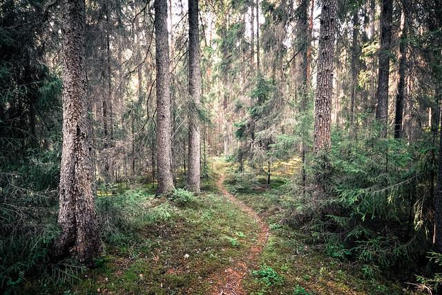 Stigens skog