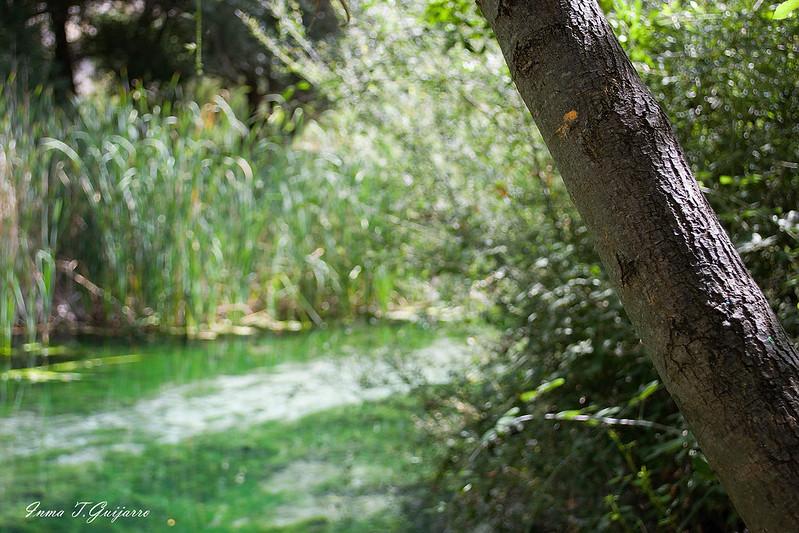 Peralta: Tronco y rio